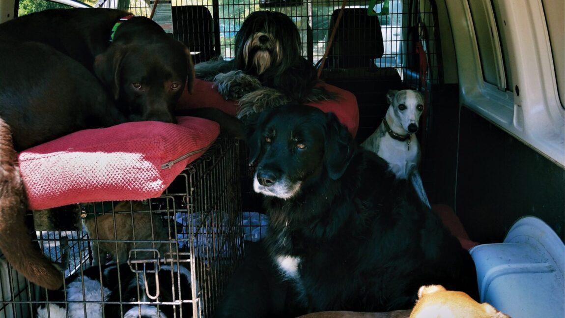 Dog-uber