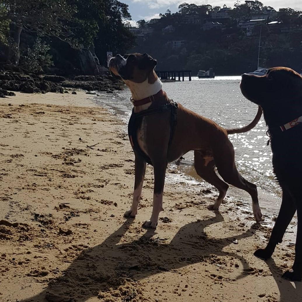 Todd and Harley beach