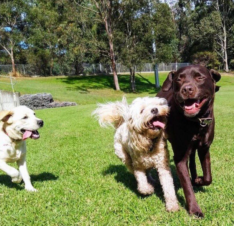 dogsrunningingroup