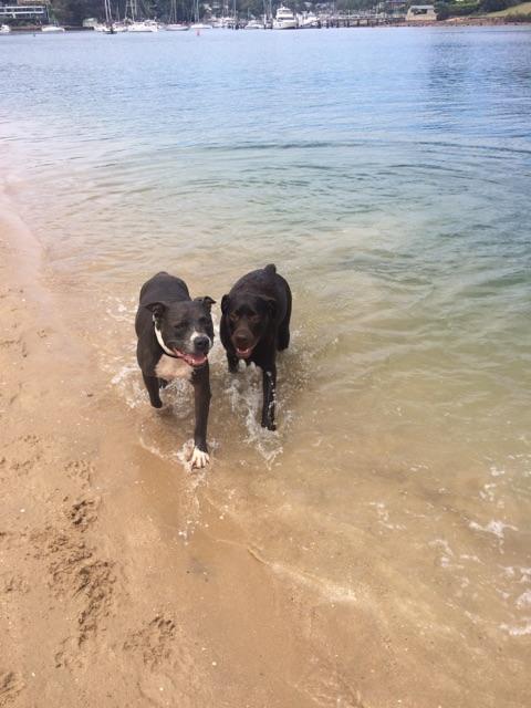 Harley at the beach IMG_3133