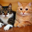 sam-tee-cats-scaled.jpg
