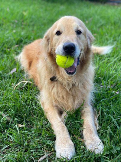 Tex and ball