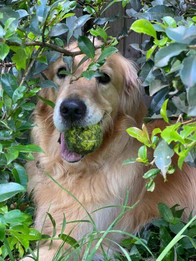 Tex in the bush
